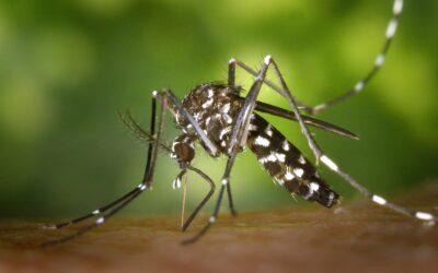 3 actions dissuasives de DEET sur les moustiques