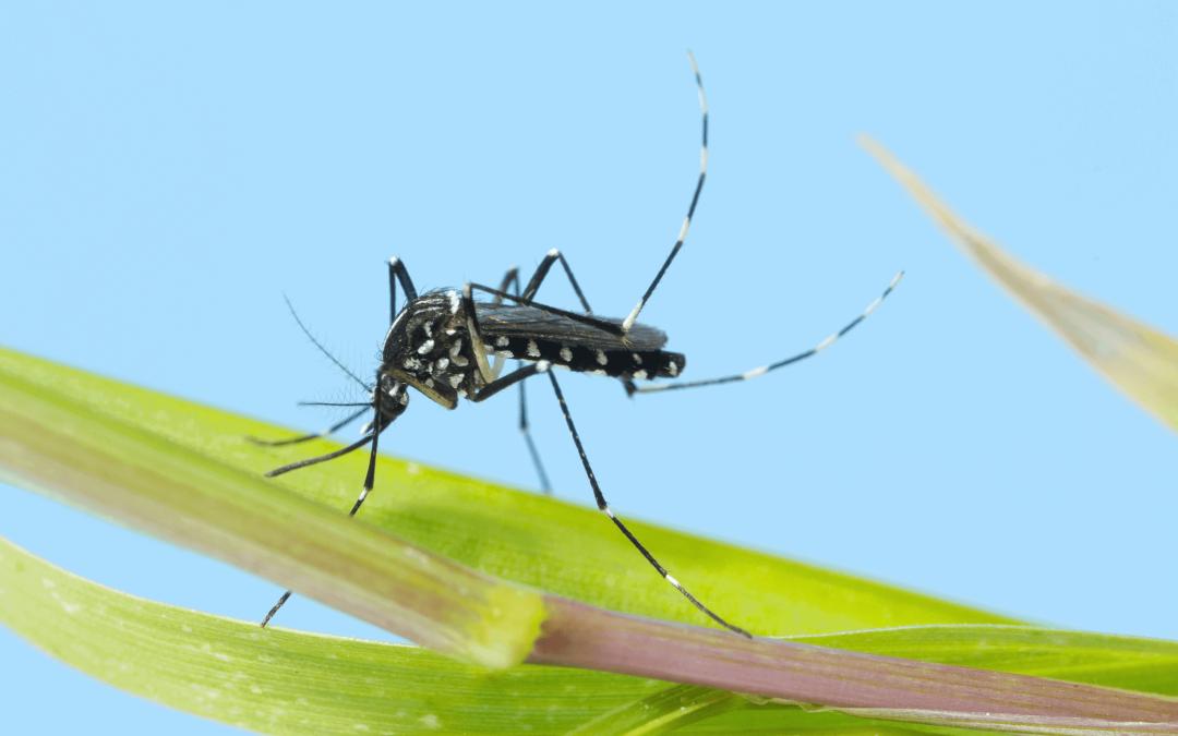 Propagation croissante des moustiques (infectés)